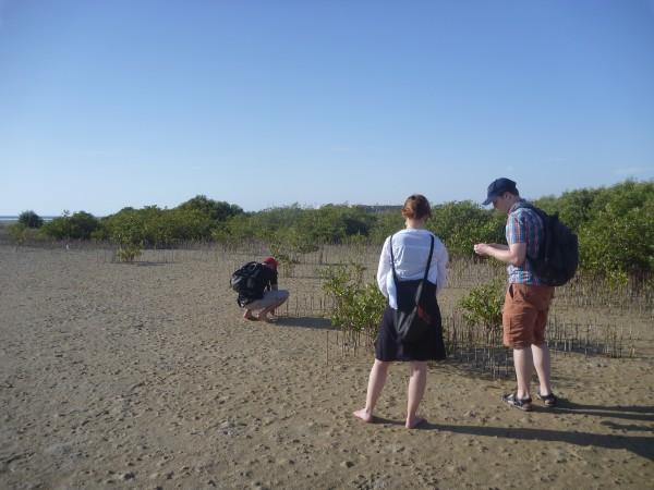 Mangroves_1